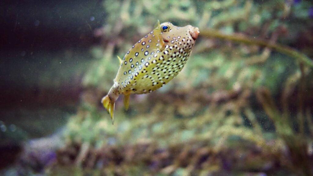 belgia z dzieckiem pairi daiza egzotyczna zolta ryba