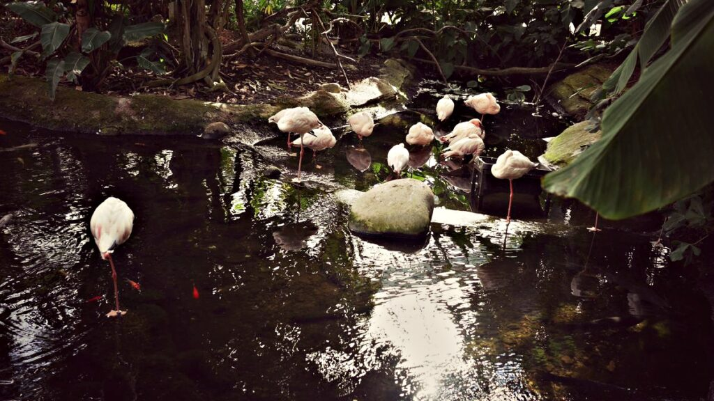 belgia z dzieckiem pairi daiza flamingi