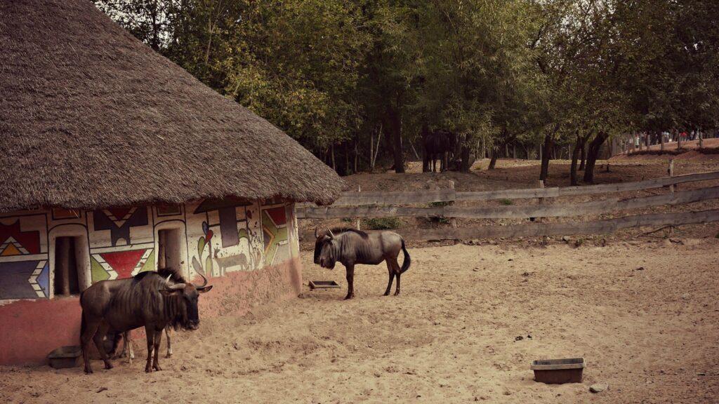 co zwiedzic z dzieckiem w belgii park pairi daiza antylopa gnu