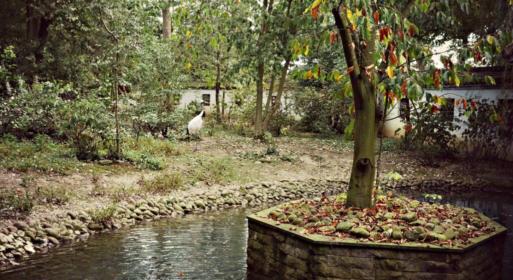 co zwiedzic z dzieckiem w belgii park pairi daiza chinski ogrod