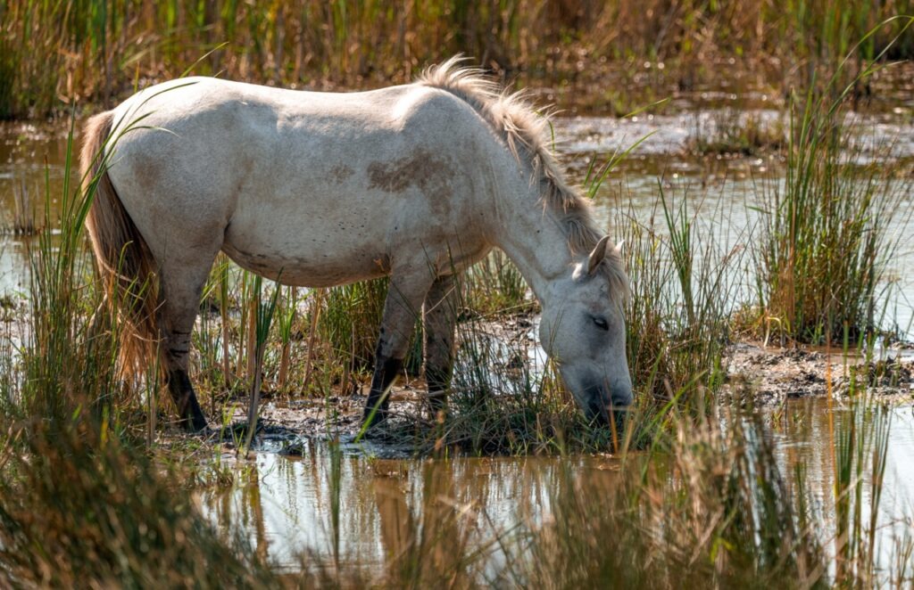 Zwiedzanie Rezerwatu Przyrody Camargue
