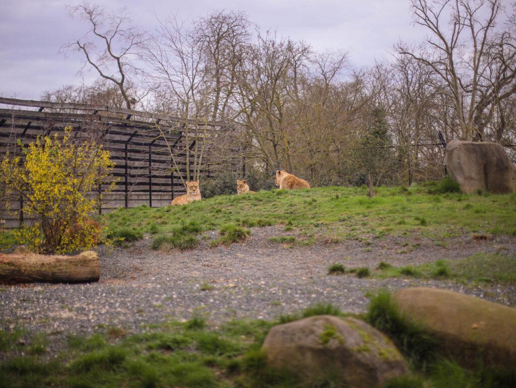 Zoo w Paryżu