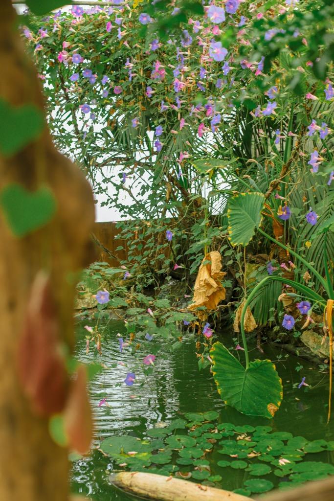 Egzotyczna ro艣linno艣膰. Farma Motyli w Prowansji.