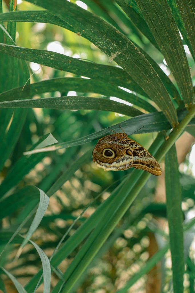 Egzotyczny motyl. Farma Motyli w Prowansji.