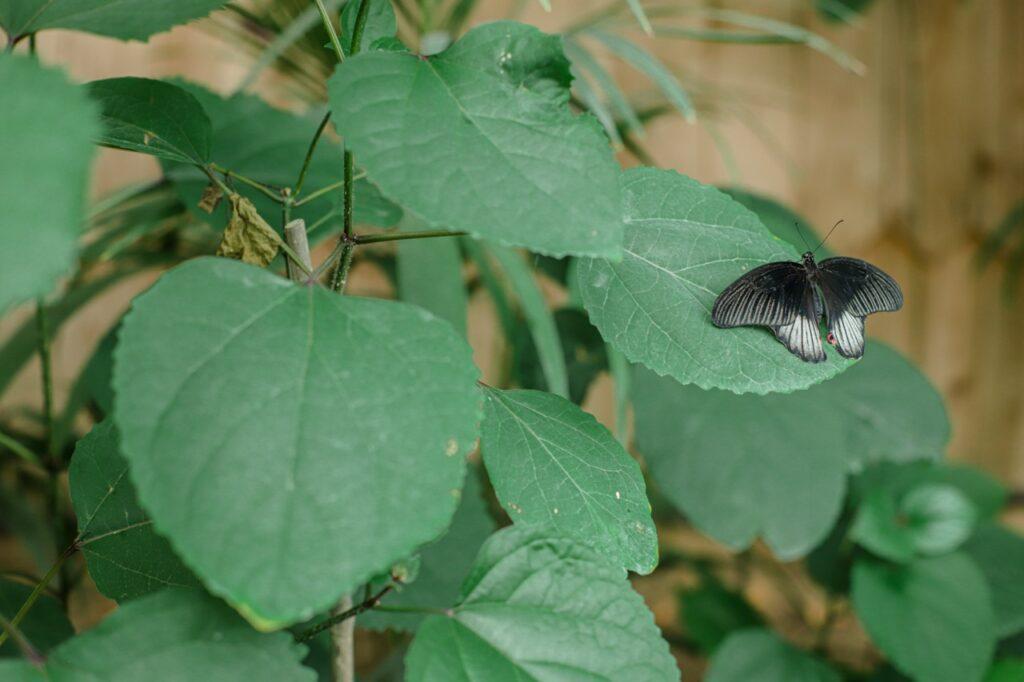 Farma Motyli w Prowansji. Egzotyczny motyl.