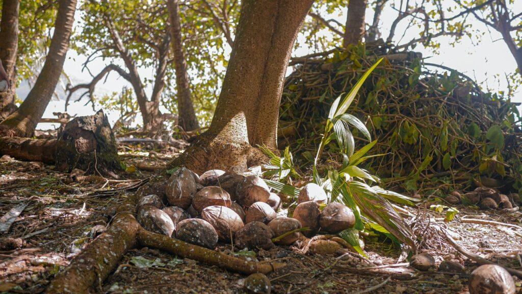 Gaj palmowy na bezludnej wyspie