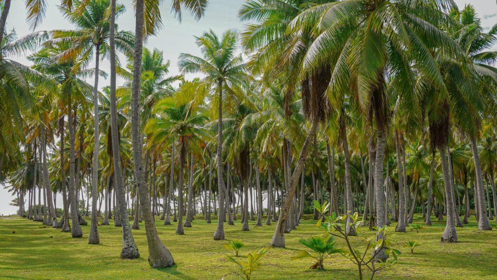 Gaj palmowy