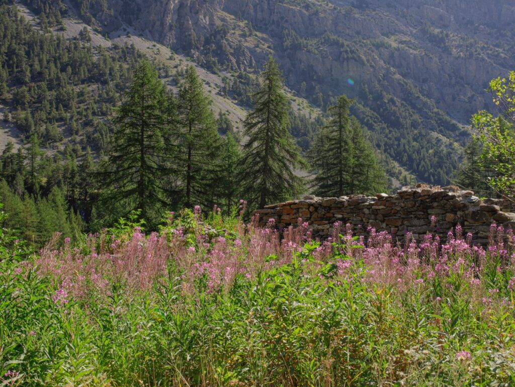 kwiaty wierzbowki lago verde piemont wloski