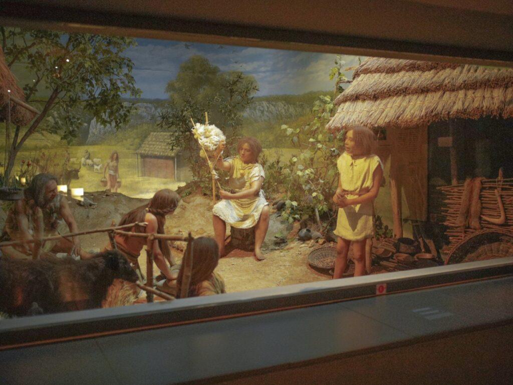 Wystawa w Muzeum Prehistorii w Prowansji.