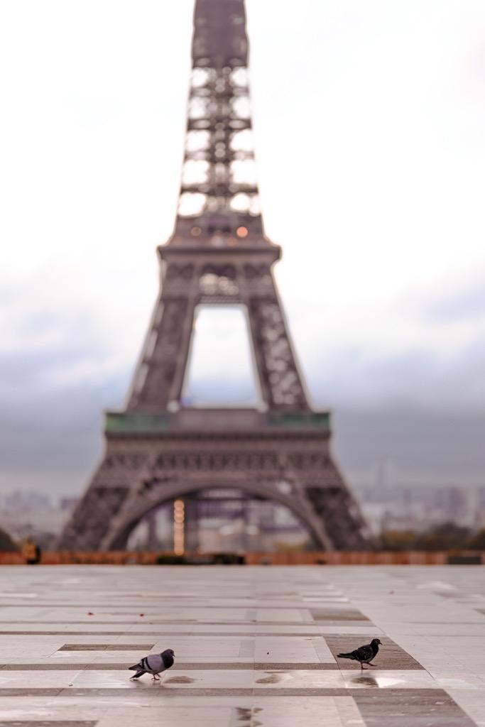 Trocadero w Paryżu. Najpiękniejsze widoki na wieżę Eiffla.