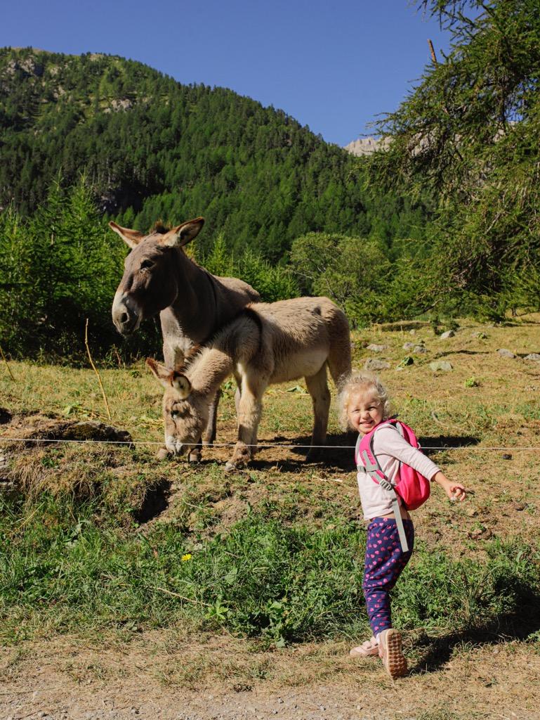 osiolek gorski dziecko w gorach aply wloskie