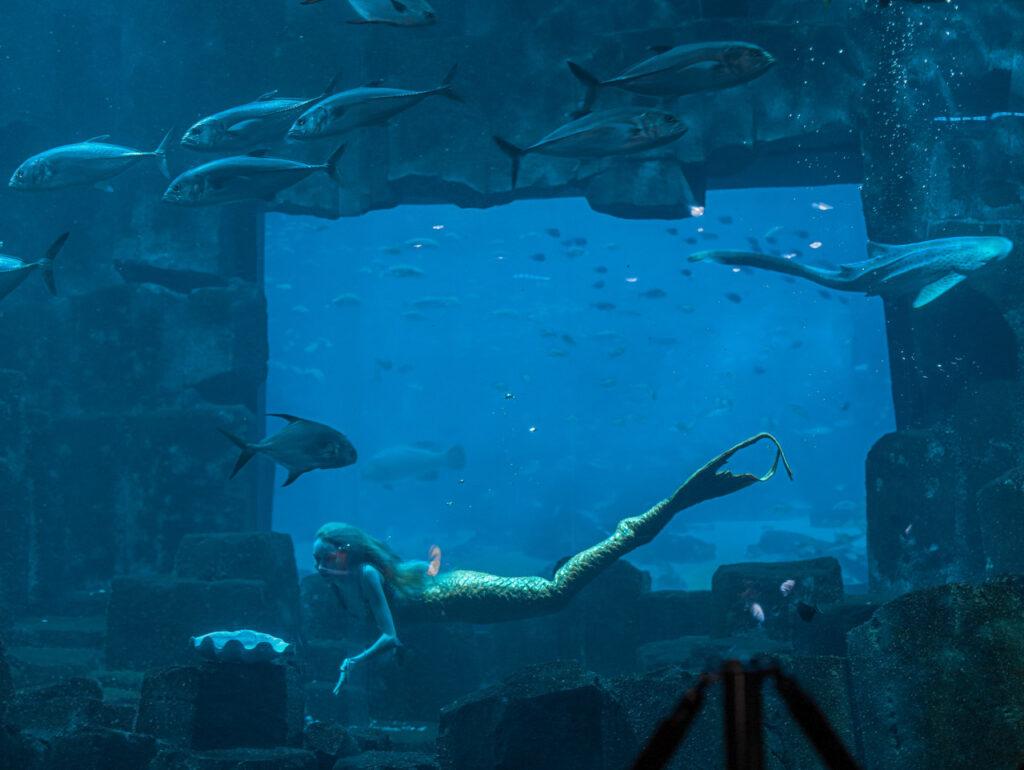Syrena w Oceanarium w Paryżu