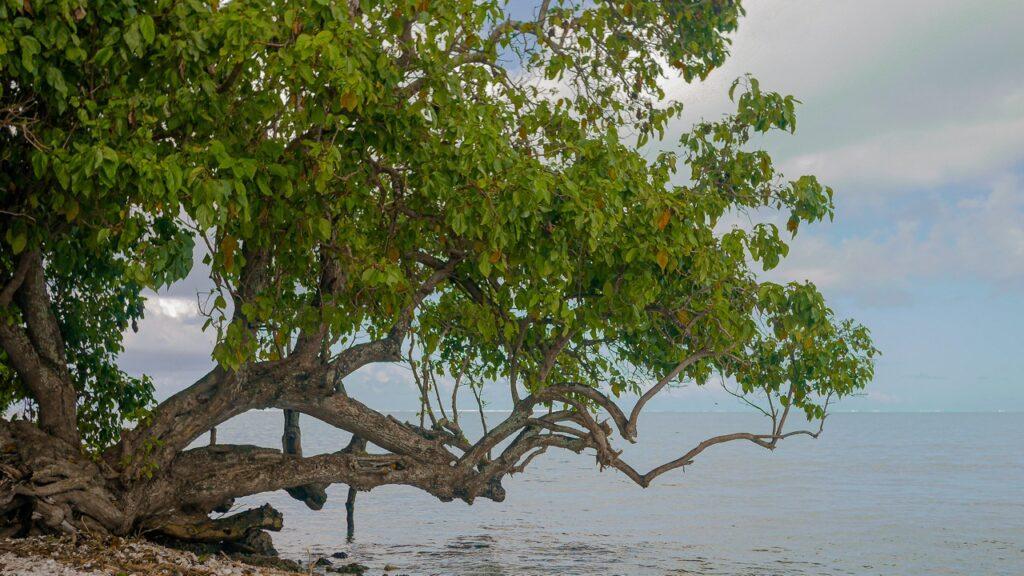 Bezludna wyspa w Polinezji Francuskiej