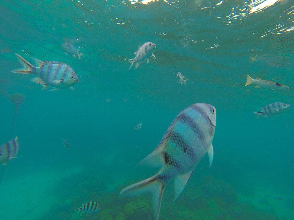 Egzotyczne ryby w Polinezji Francuskiej