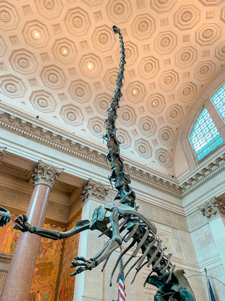 Szkielet dinozaura w Nowym Jorku