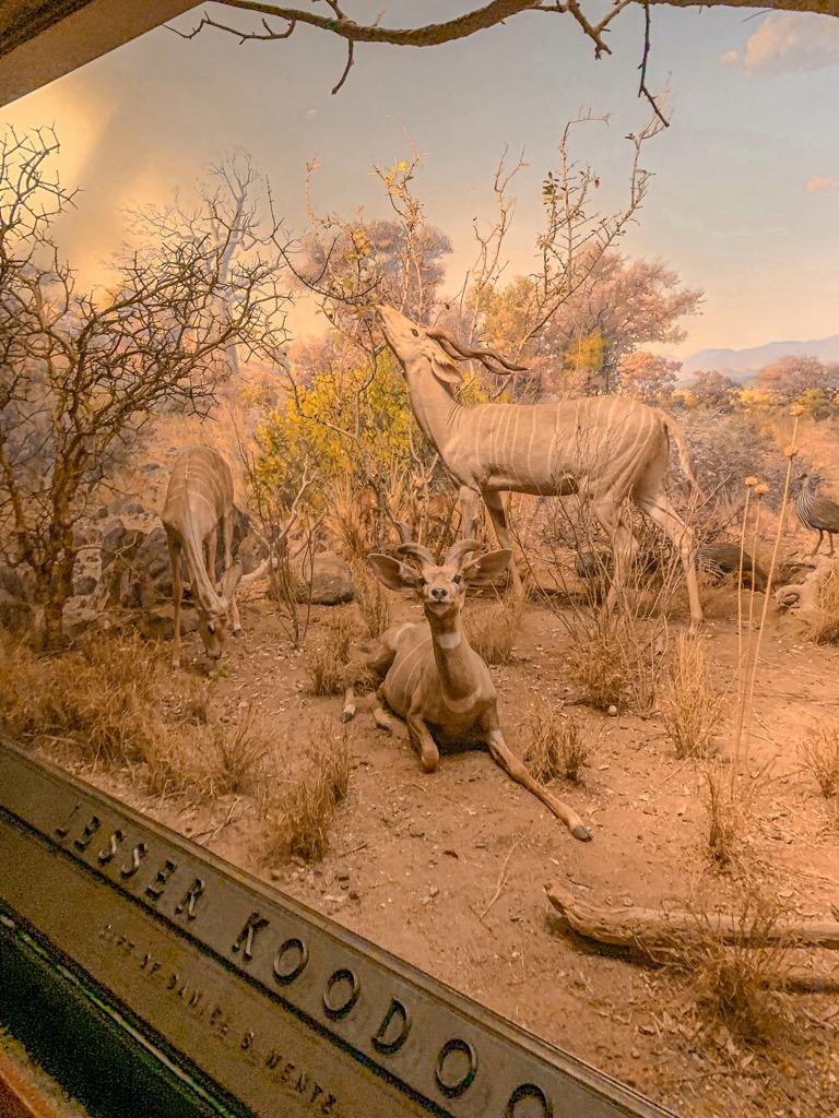 Wypchane zwierz臋ta w Muzeum Historii Naturalnej