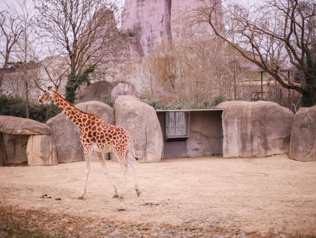 Zwiedzanie Zoo Vincennes w Paryżu